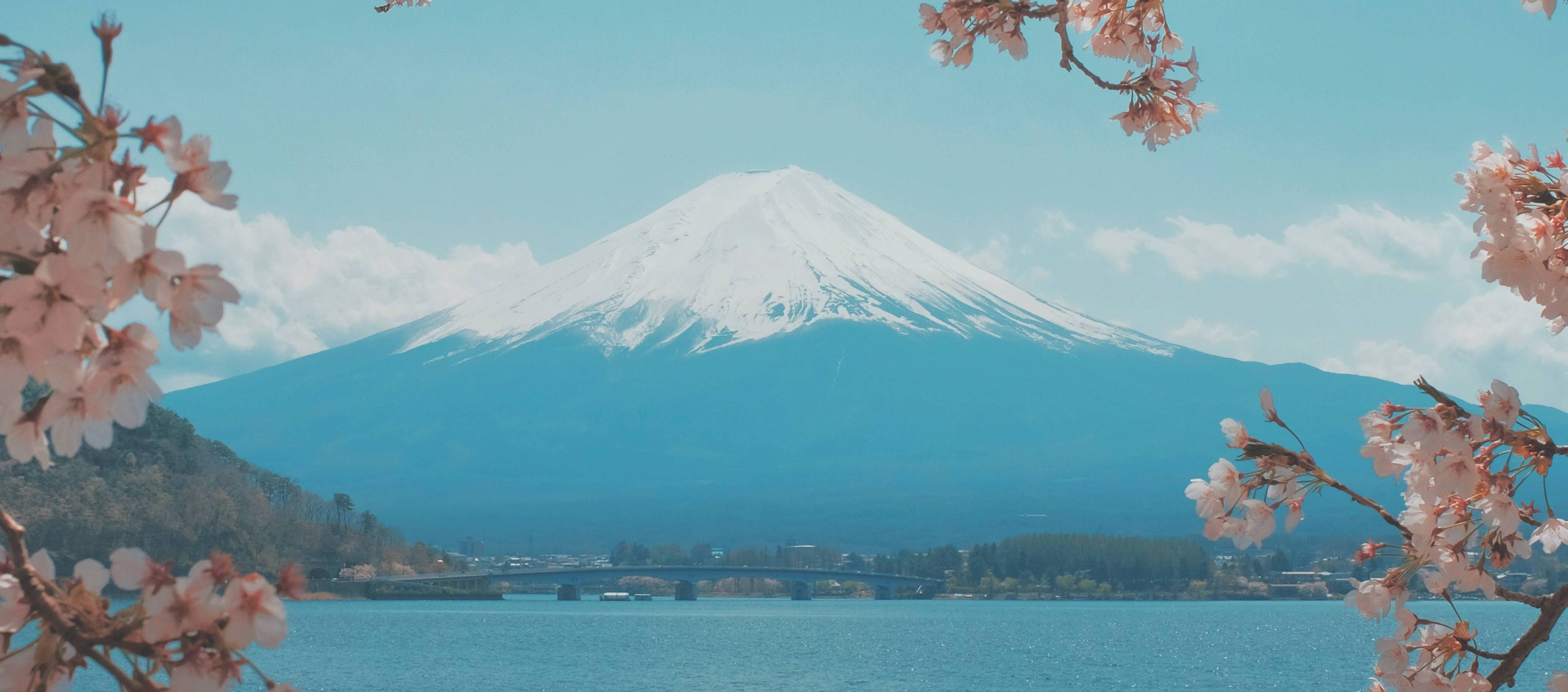 Sacred Mountain Fuji as framed by cherry blossoms.
